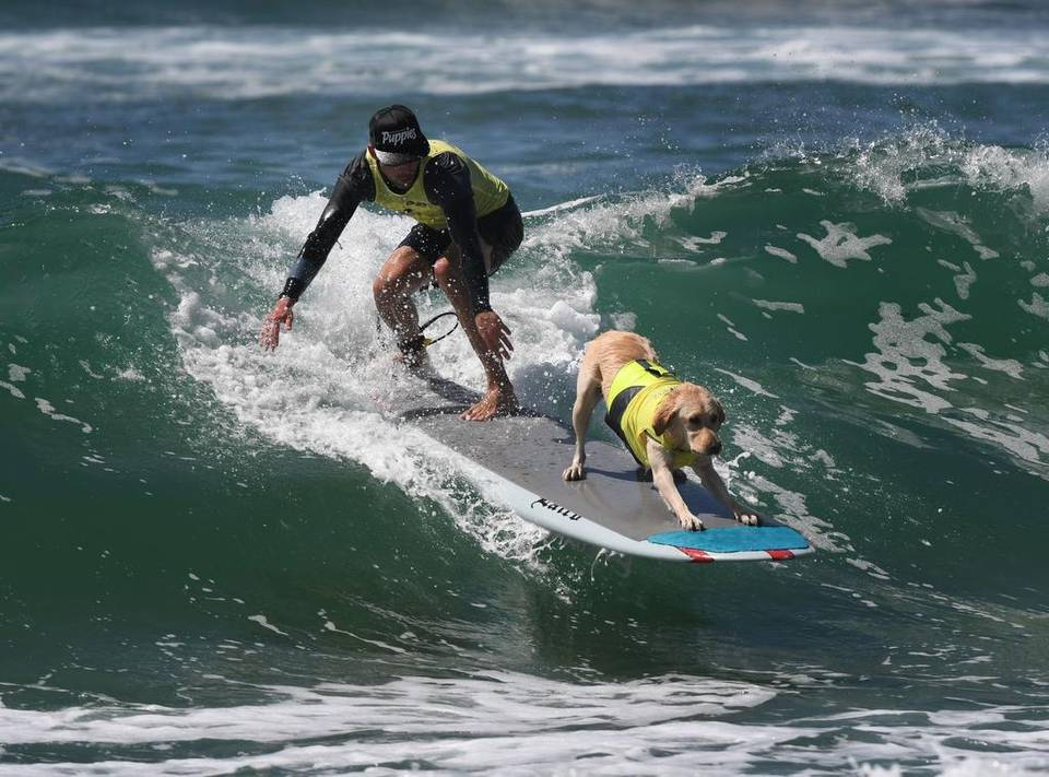 perros surferos en el surf city surf dog